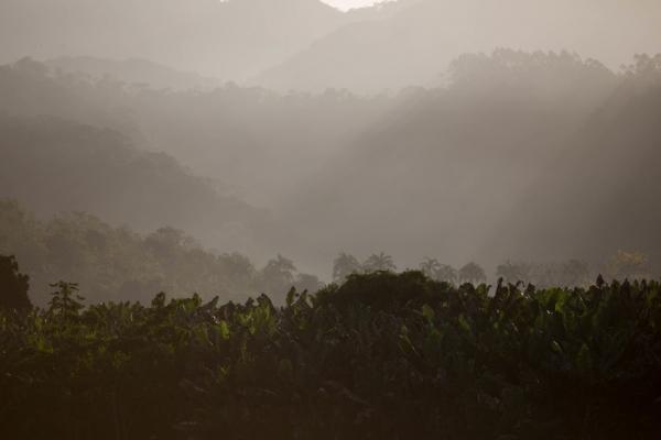 아마존 보호