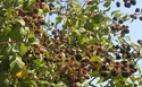 [산티아고 영성순례기] 까미노의 산딸기가 주는 기쁨과 유혹